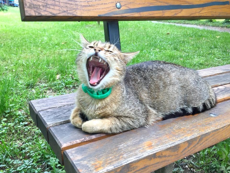 Udruženje Beta: Nedopustivo ubijati mačke