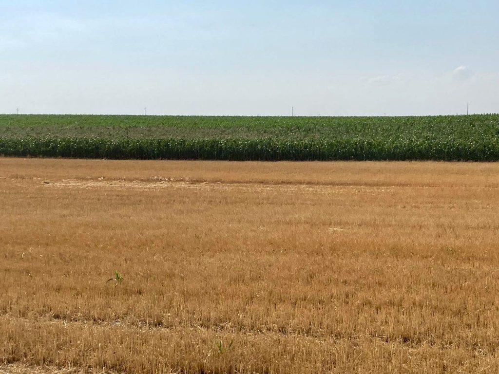 Poljoprivrednici u Đurđinu gotovo bez šansi da licitiraju i zakupe njive: Kroje se zakoni koji legalizuju manipulaciju