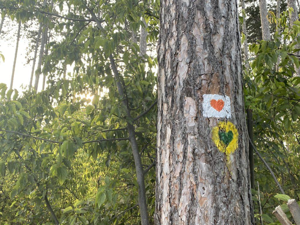Okrugli sto o seči subotičkih šuma u utorak, 5. oktobra, u Infostud Hub-u: Učestvuju stručnjaci i građani